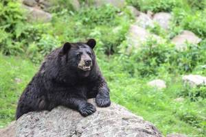 Bear Suspected of Killing Hiker in New Jersey